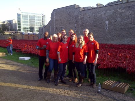 H&D staff on their volunteer day planting poppies.